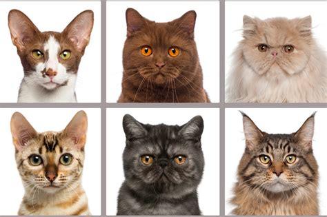 happy international cat day verisign blog