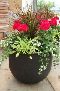 plant and patio 25 best ideas about potted plants on outdoor