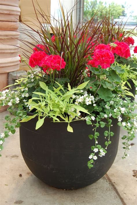 Outside Flower Pots 25 Best Ideas About Potted Plants On Outdoor
