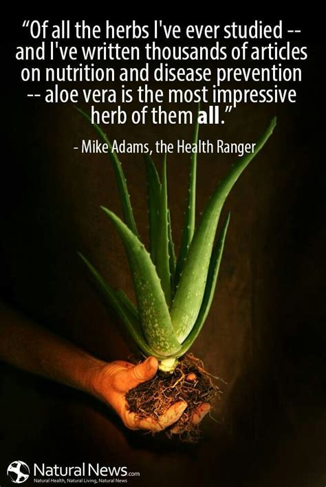 herb quotes quotes about herb plants quotesgram