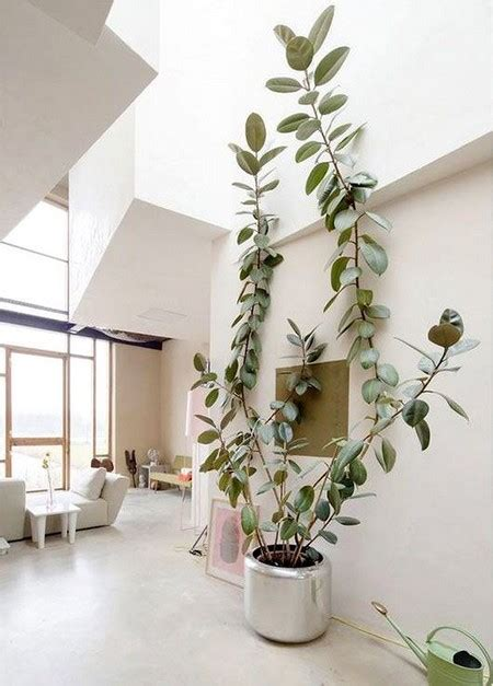 awesome home and then large plants tall houseplants to beautiful large indoor plants contemporary decoration