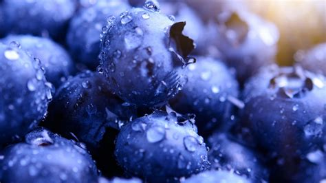 blueberry wallpaper blueberries hd wallpapers hd wallpapers id 22914
