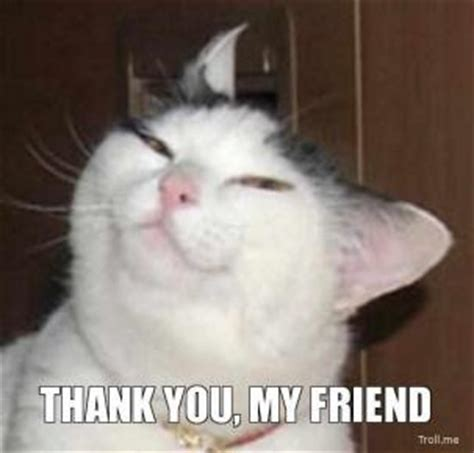 Thank You Cat Meme - fluffy s note part 14 page 21 soberrecovery