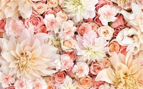 blush pink desk l pink coral blush floral flowers blooms desktop