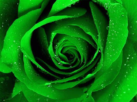 free green free green flowers 17341 1600x1200 px hdwallsource com