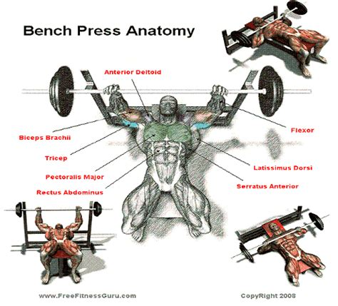 bench press facts the gallery for gt dumbbell bench press muscles worked