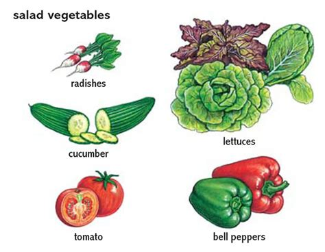 fruit vegetables definition definition of fruit in oxford dictionary driverlayer