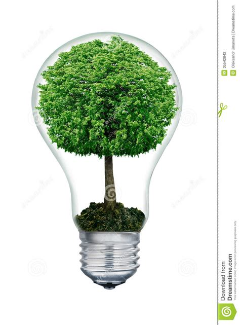 the tree inside of the light bulb isolated on white stock