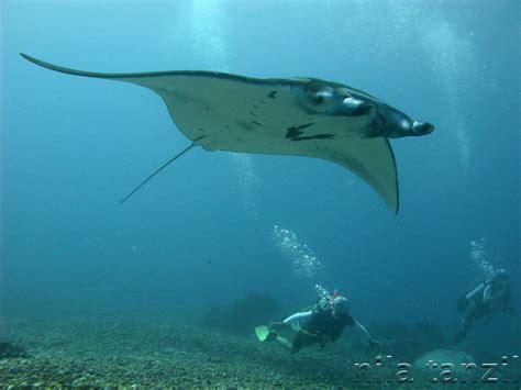 lebih banyak ikan di laut atau bintang di langit kisah 10 hewan berbahaya di laut bening ravire