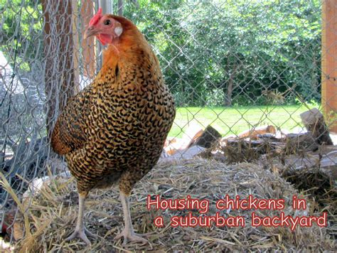 My Backyard Chicken Motoclown S Chicken Coop Backyard My Backyard Chicken