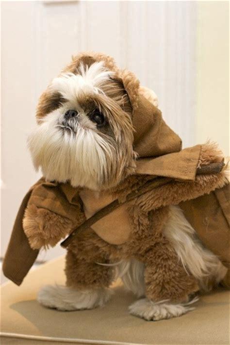 ewok shih tzu a shih tzu dressed as an ewok much cuteness
