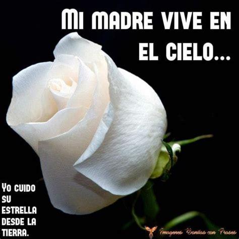 imagen de una hermosa rosa blanca para whatsapp rosas blancas con mensajes de amor para una madre fallecida