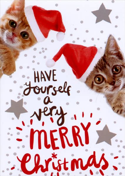 merry kittens cute cat box   american  christmas cards  ebay