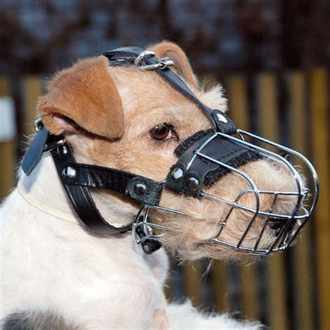 muzzle for small dogs small muzzles uk beagle muzzle