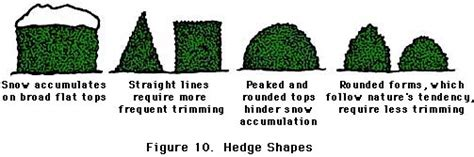 how to trim the back when going for short hair on the sides follow proper pruning techniques earth kind 174 landscaping