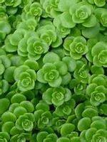 piante e fiori in ordine alfabetico elenco piante grasse in ordine alfabetico