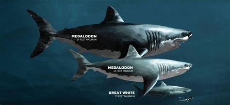 what is the biggest boat in the whole wide world how big the megalodon really was thedepthsbelow