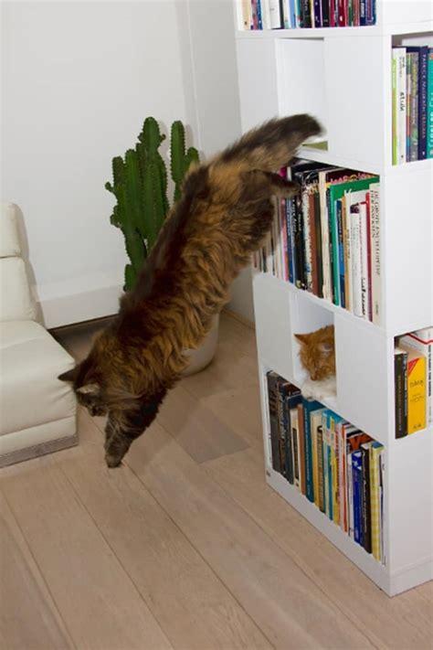 catcase  bookcase   ideal playground   cat
