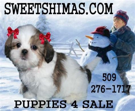 shima puppies spokane for sale puppies for sale