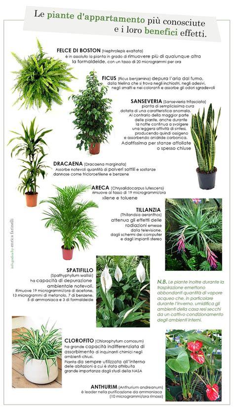piante da interno oltre 25 fantastiche idee su piante da interno su