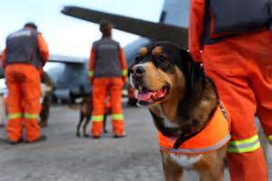 Rescue Dogs Search And Rescue Dogs