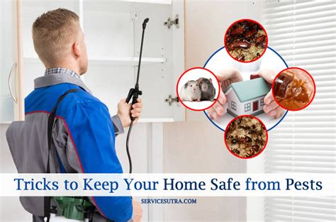 how to keep your home safe from pests like bedbugs and