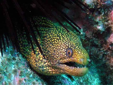 moray eel 10 moray eels muraenidae