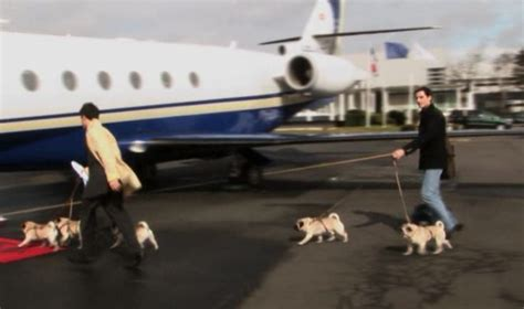 valentino and his pugs valentino s pugs going on a jet plane