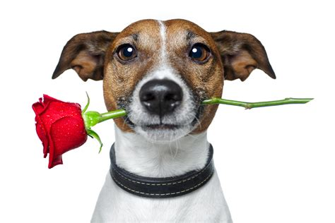 things to do with dogs 6 things to do with your on s day