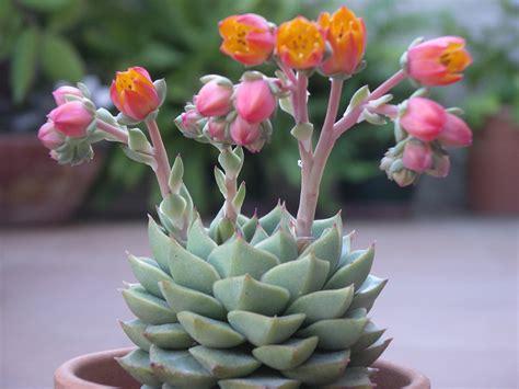 piante da appartamento con fiore piante da appartamento grasse verdi con fiori come