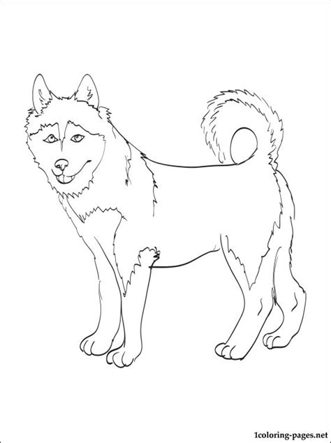 coloring pages of breeds alaskan klee coloring page coloring pages