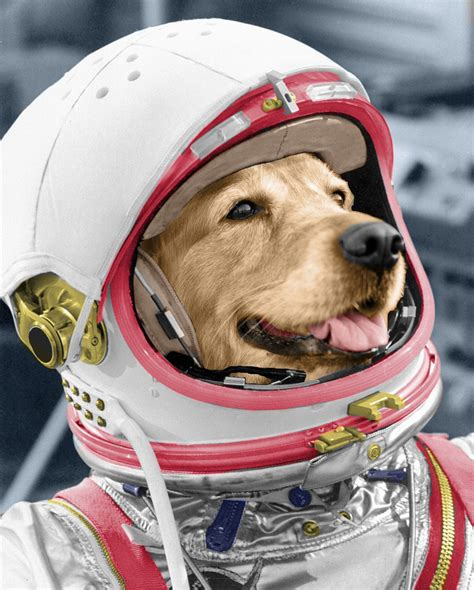 Dogs In Space lab in space suit labrador space suits
