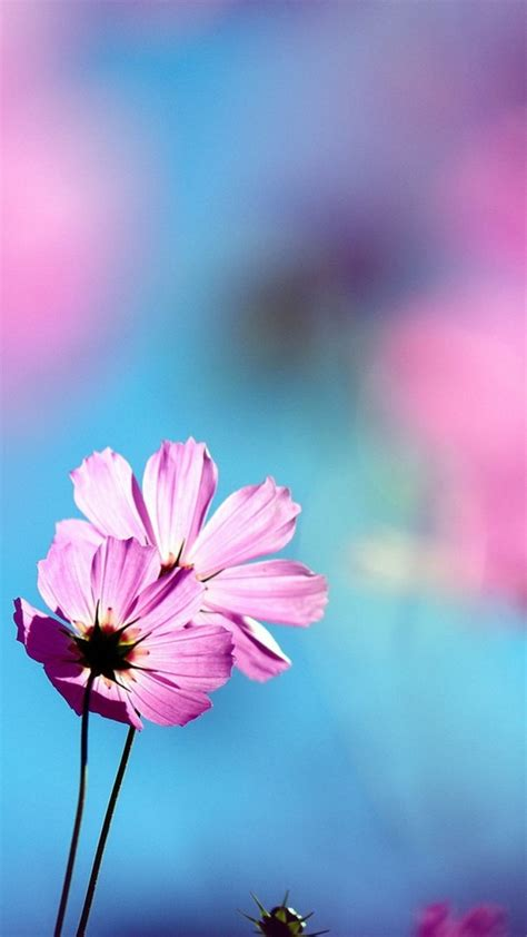 hd wallpaper for android flower uniwallpaper the best in its class