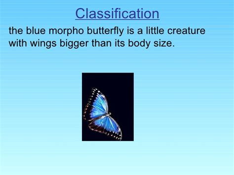 Jufm20 Bodysuit Movement Blue Animal natalie a the blue morpho