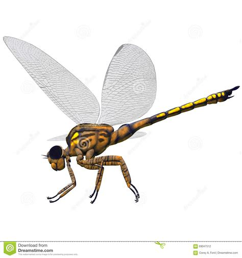 Dragonfly L by Meganeura Dragonfly Side Profile Stock Illustration