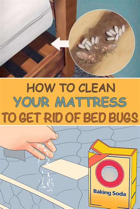 clean  mattress   rid  bed bugs simple tips