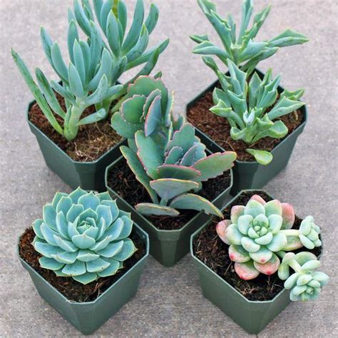 succulent containers for sale 65 best products images on