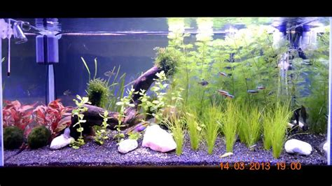 lade a led per acquari lada a led per acquari aquarium led l