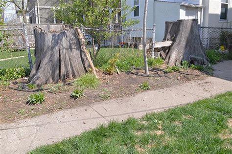 building a retaining wall garden the stump garden building a retaining wall s big idea