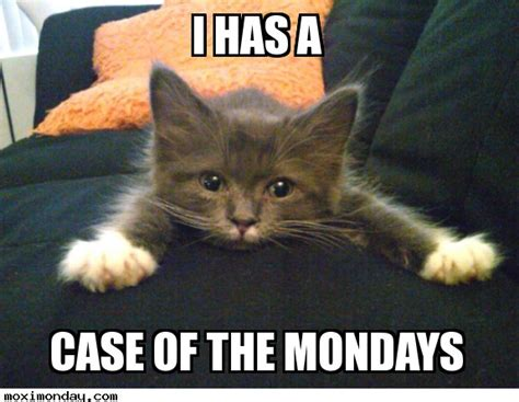 Case Of The Mondays Meme - cute kitten meme youre not funny gifs find share on