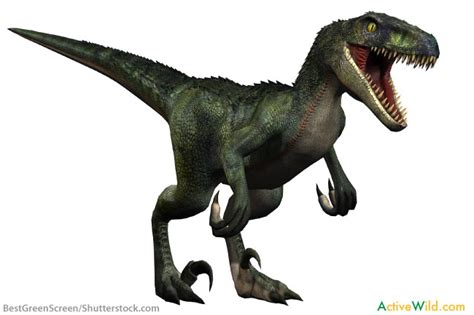 what does velociraptor eat it velociraptor facts for kids students adults with