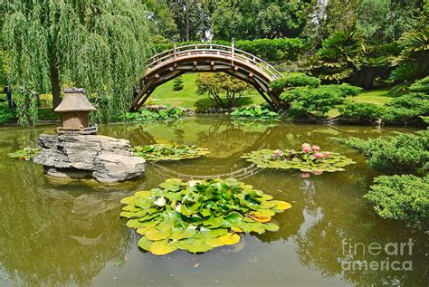 koi pond bridge japanese garden with moon bridge and lotus pond with koi