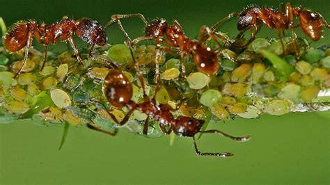 ameisen in der wohnung was tun gegen ameisen in der wohnung bauen wohnen