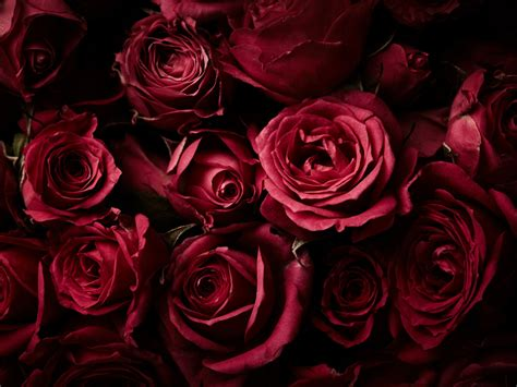 wallpaper red roses rose flowers dark background