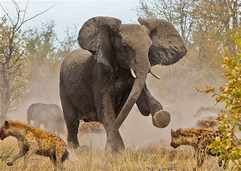National Geographic Wildlife 22 best wildlife photos from national geographic traveler