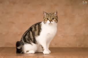 cat lifespan the life expectancy of cats pets4homes