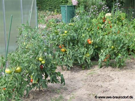 cing betten garten in nanopics garten garten tomaten