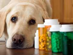 the counter anti inflammatory for dogs anti inflammatory for dogs the counter vs prescription