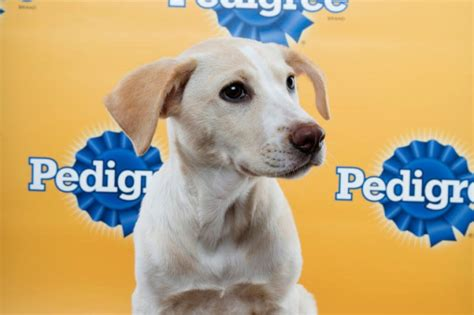 puppy bowl 2015 puppy bowl 2015 lineup best photos of the canines