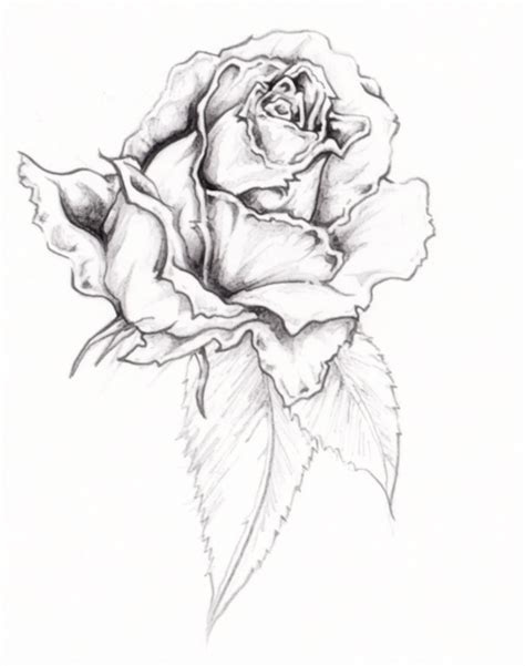 flower tattoo rose tattoos designs ideas and meaning tattoos for you